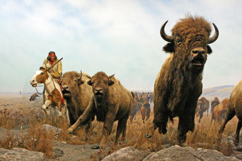 Indianer mit Bison auf der Büffeljagd in einem Diorama im Manitoba Museum in Winnipeg Kanada