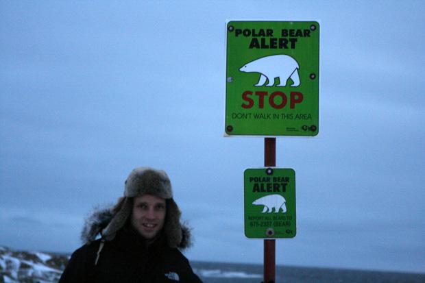 Eisbären in freier Wildbahn zu sehen, ist einfach nur genial