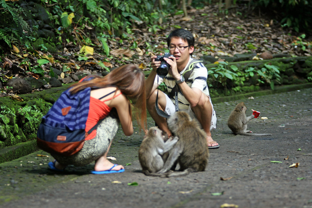 Touristen fotografieren Affen im Monkey Forest Ubud auf Bali in Indonesien