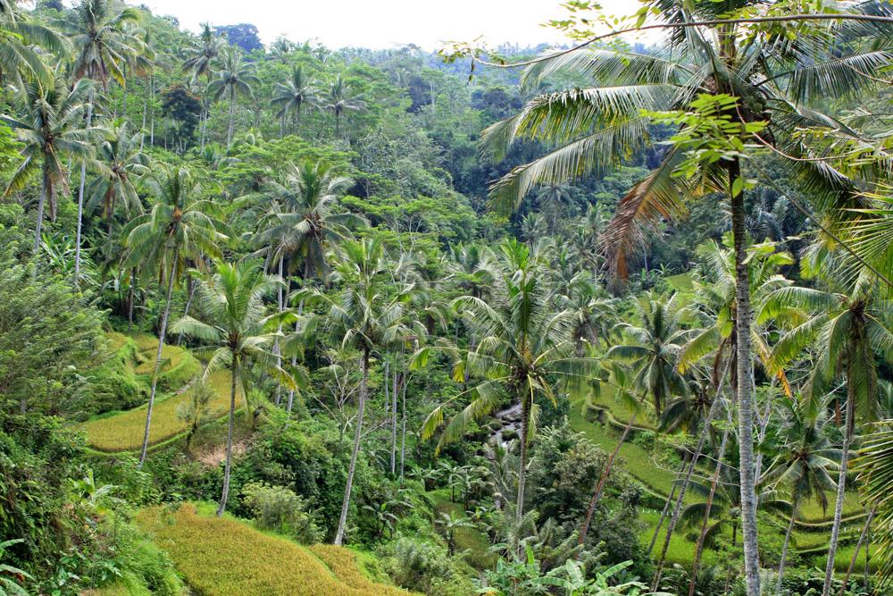 Dschungel auf Bali