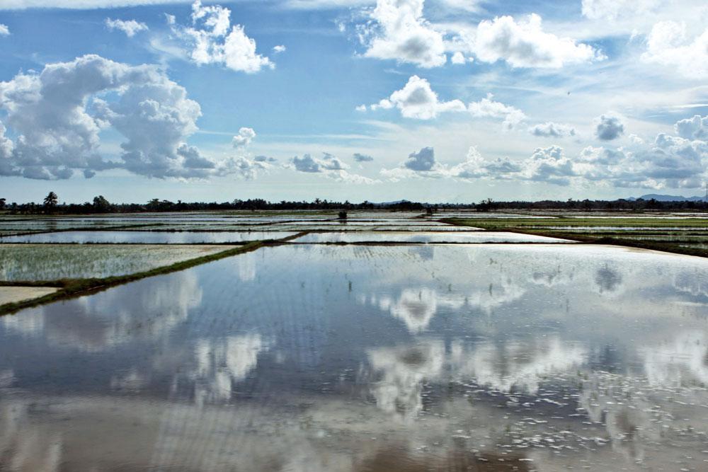Schier endlos wirkten die Reisfelder auf Sulawesi in Indonesien.