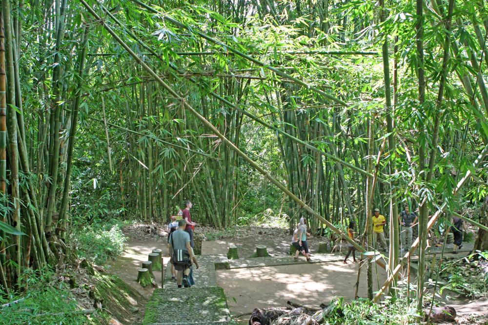 Durch dichten Bambuswald ging es zu einem weiteren Begräbnisplatz.