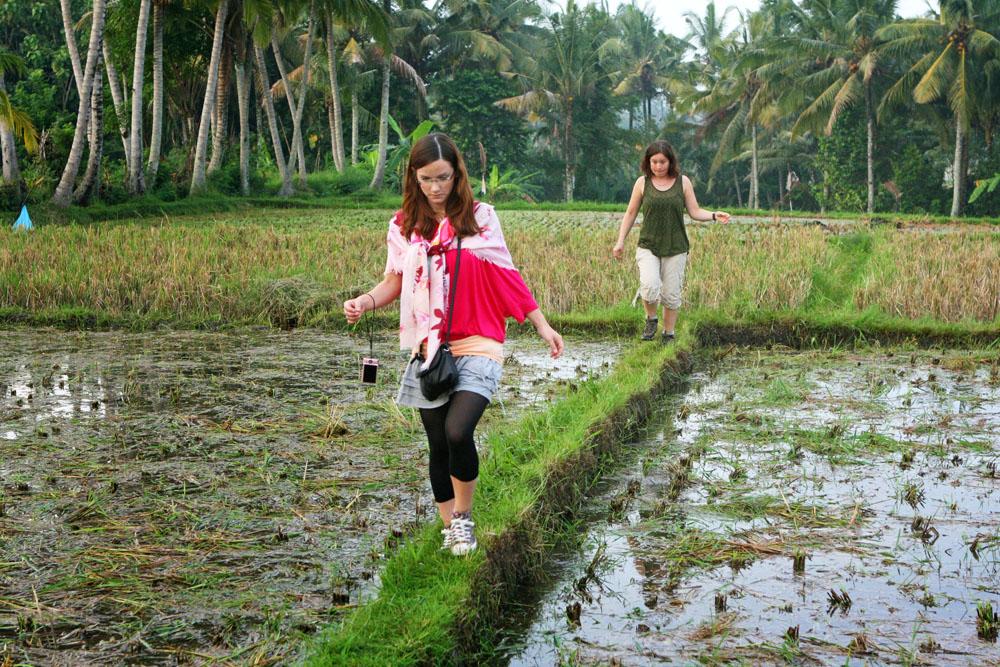 Touristen wandern auf Bali über ein Reisfeld