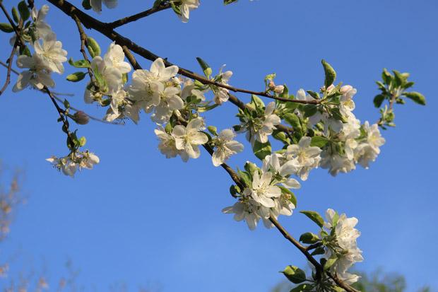 Im Frühling blüht hier fast alles