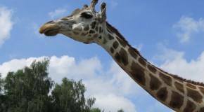 Safari in Deutschland