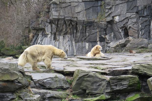 Kein Vergleich zum Anblick von Eisbären in Freiheit