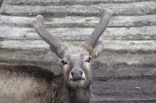 Wer kann mir sagen, was das für ein Tier ist?