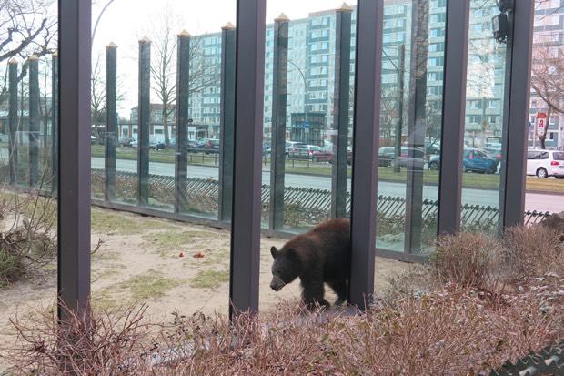 Bereits von außerhalb des Parks ist der erste Bär zu sehen