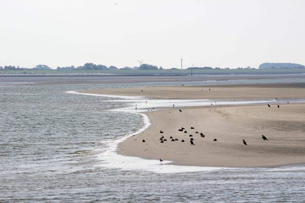 Sandbank vor Norderney in der Nordsee