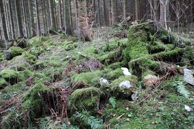 Die Szenerie wirkt teils wie in einem Märchenwald