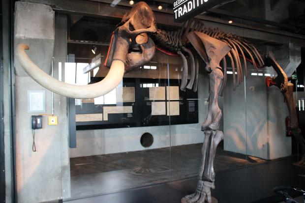 Das Skelett eines Mammuts steht in Essen