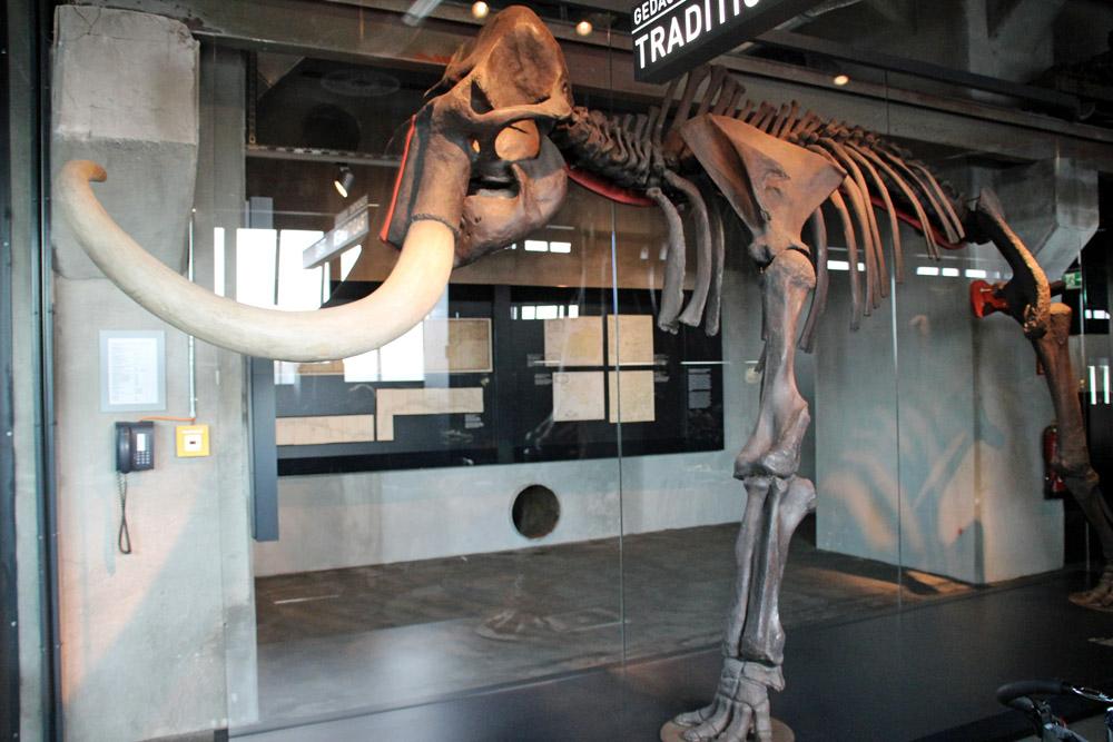 Das Skelett eines Mammuts steht im Ruhr Museum Essen