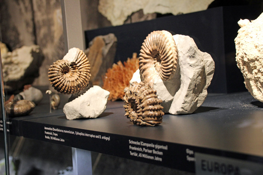 Versteinerungen von Schnecken im Ruhr Museum