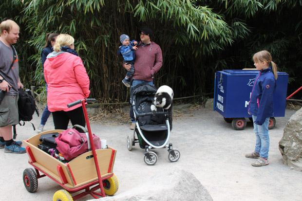 So mancher Affe inspiziert die Bollerwagen der Besucher