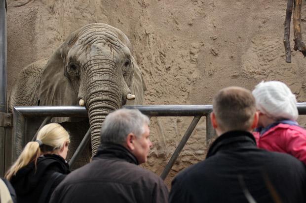 Große Tiere sind zu sehen