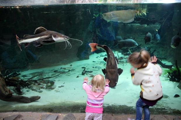 Viele große Fische tummeln sich in den Becken