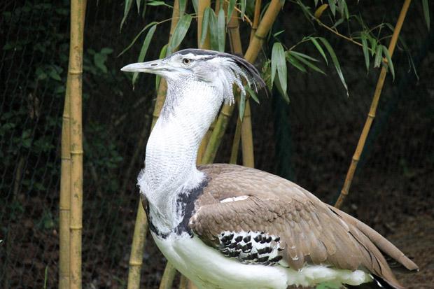 Viele verschiedene Vogelarten gibt es im Zoo Duisburg