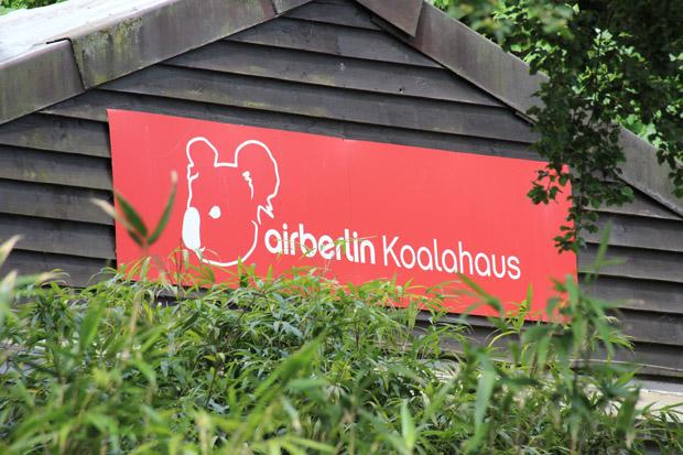 Air Berlin fliegt frische Nahrung für die Koalas ein