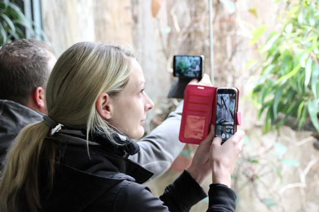 Die Koalas gehören wohl zu den am häufigsten fotografierten Tieren im Zoo Duisburg