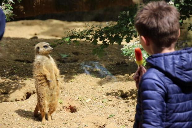 Durch Scheiben können die Besucher die Tiere sehr gut beobachten