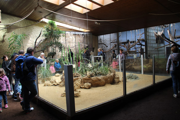 Zwischen all den Affen leben auch Schildkröten