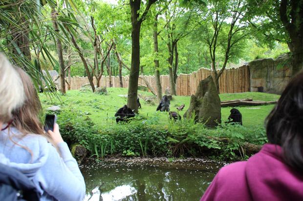 Die Freianlage für Flachlandgorillas