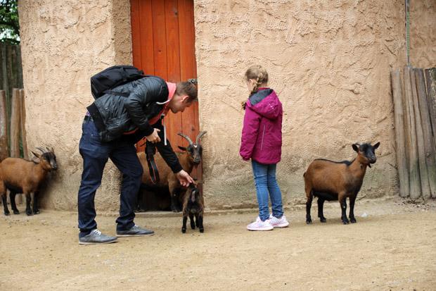Ziegen und Schafe dürfen gestreichelt und gefüttert werden