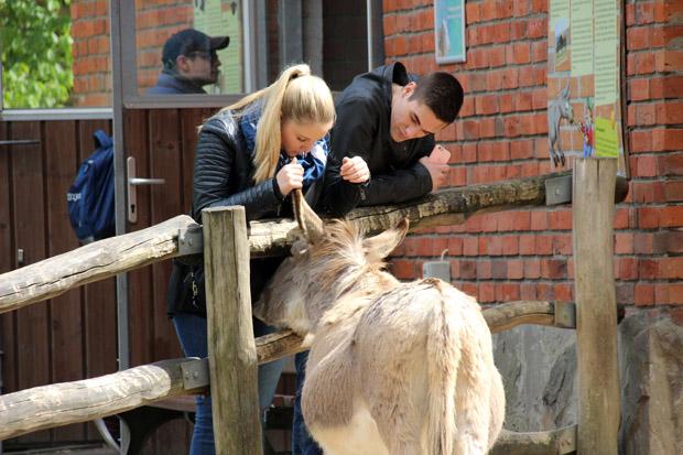 Auch an die Esel können Streicheleinheiten verteilt werden