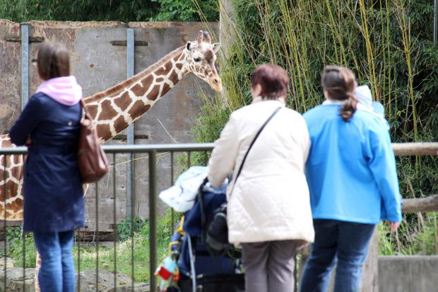 Das Giraffen-Gehege befindet sich direkt am Haupteingang