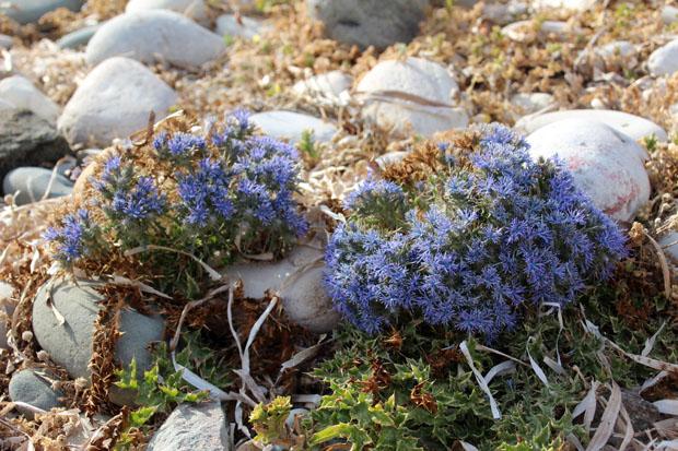 Vereinzelt finden sich schmucke Pflanzen am steinigen Ufer