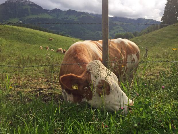 Keine Spur vom Teufel! Vor dem Brünnstein (hinten links) weiden friedlich Kühe