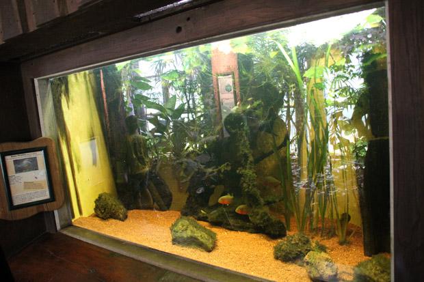 Von einem Amazonas-Aquarium erwarte ich irgendwie etwas anderes
