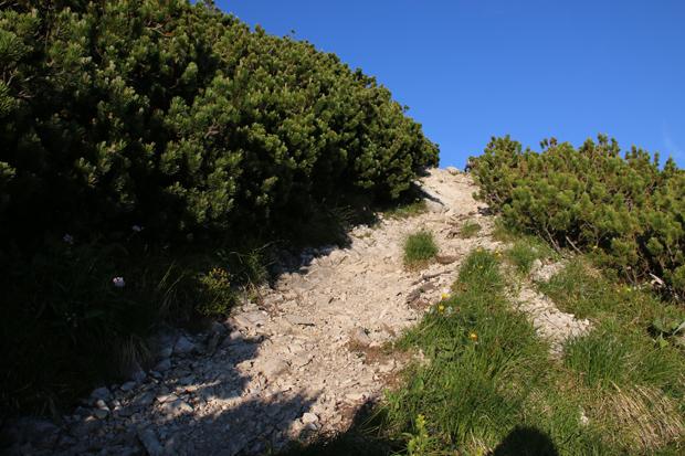 Auf einem schmalen Schotterweg zwischen Latschenkiefern überwindet man die letzten Höhenmeter
