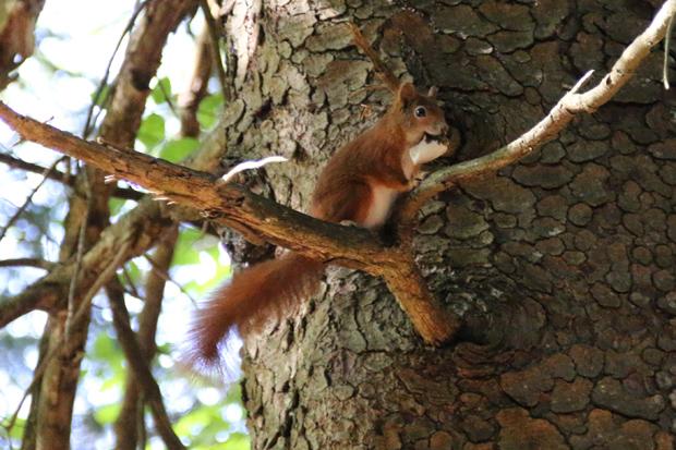 Auch viele kleinere Tiere, beispielsweise Eichhörnchen oder Schmetterlinge entdeckt man häufig