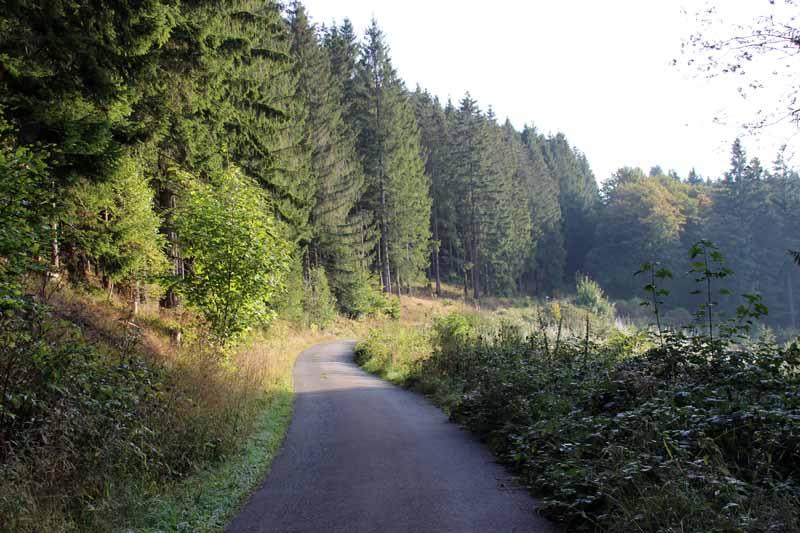 Anfangs führt der Weg über eine Forststraße
