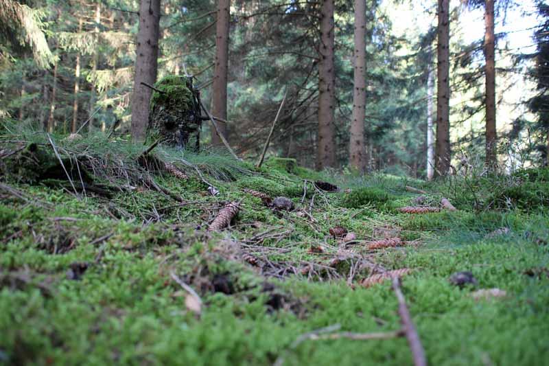Der Duft des Waldes ist unbeschreiblich