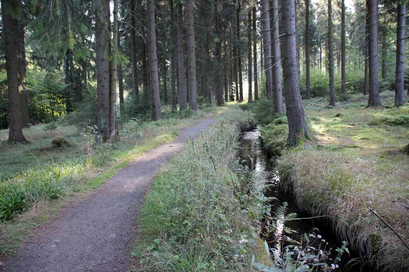 Auch hier führt der Hexenstieg entlang des Dammgrabens