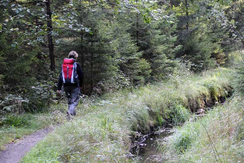 Zwischen Altenau und Torfhaus ist man fast allein unterwegs
