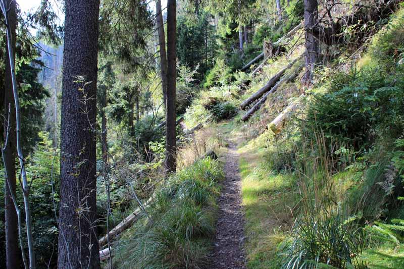 Einer der schönsten Abschnitte liegt zwischen Altenau und Torfhaus