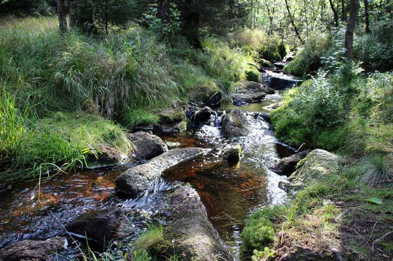 Wasser ist beim Wandern im Harz ein ständiger Begleiter