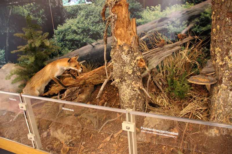 Die Tierwelt des Harzes ist ausgestellt