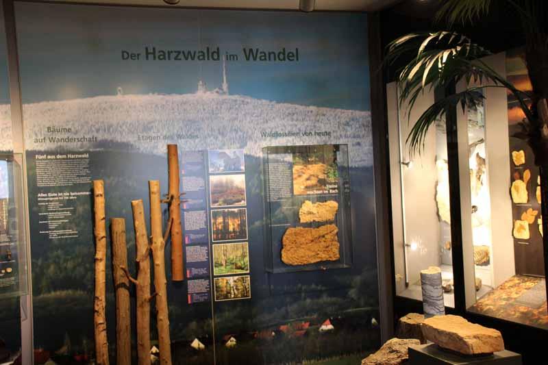Der Harzwald im Wandel