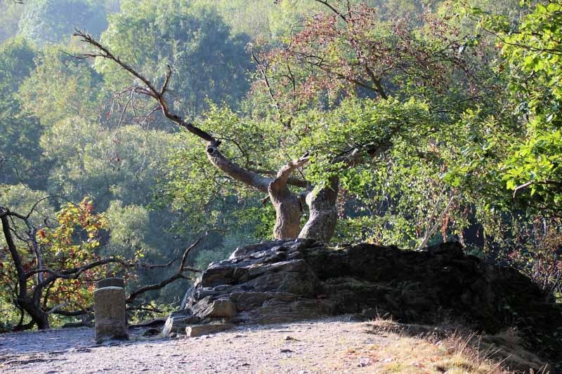 Viele alte Bäume stehen hier