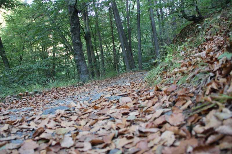 Der Herbst hat begonnen