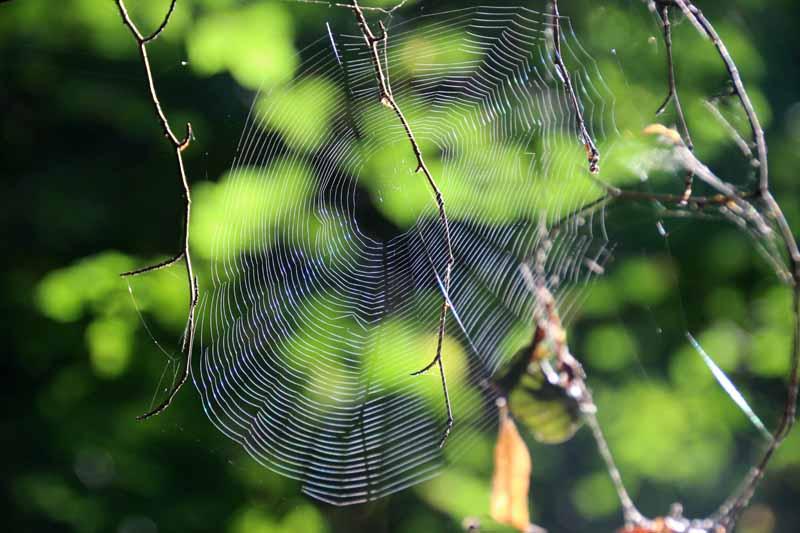Ein Spinnennetz leuchtet in der Sonne