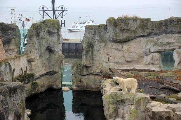 Die Eisbären-Anlage ist großzügig gestaltet