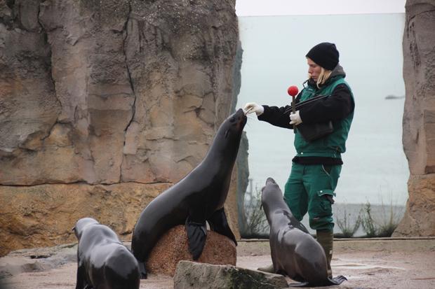 Seelöwen sind zu sehen