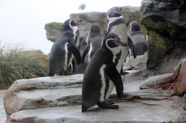 Auch Pinguine gibt es im Zoo am Meer