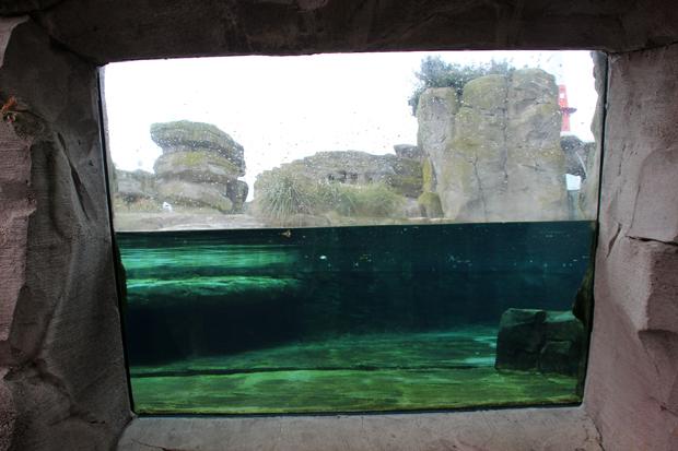 Viele Scheiben ermöglichen auch den Blick unter Wasser