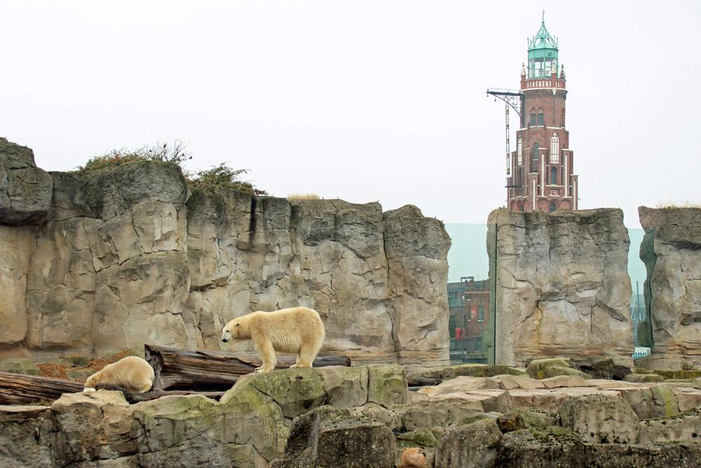 Der Zoo am Meer in Bremerhaven zeigt Eisbären vor einem Leuchtturm